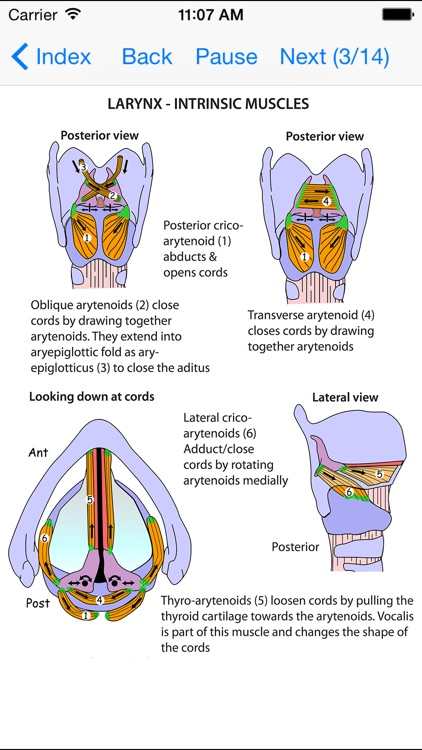 Anatomy Lectures and MCQs