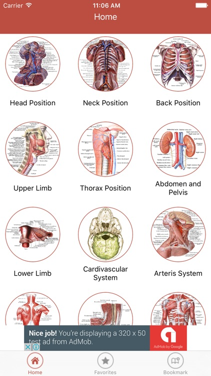 Human Anatomy Atlas – 3D Anatomical Model Pro