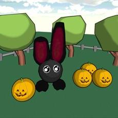 Activities of Black Rabbit!