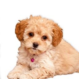 Puppy Chat