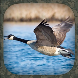 Goose Hunting Calls Apple Watch App