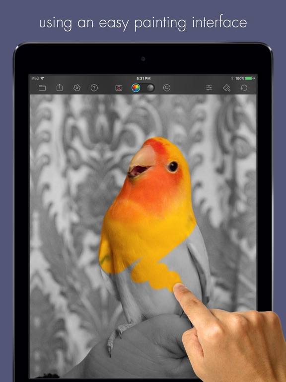 Color Splash for iPad Screenshots