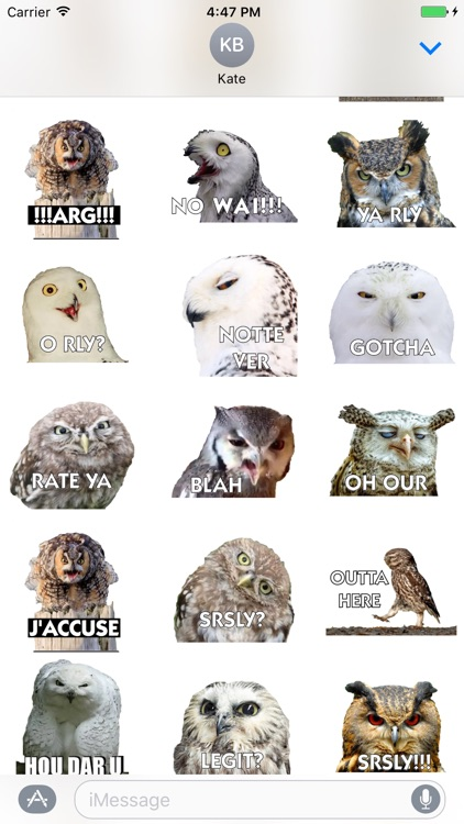 Talking Owl Sticker for iMessage