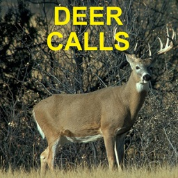 Deer Calls and Deer Sounds for Deer Hunting