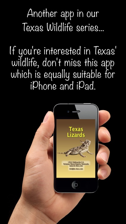 Texas Lizards – Guide to the Most Common Species