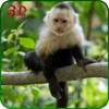 猴子模拟器野生动物对猴子