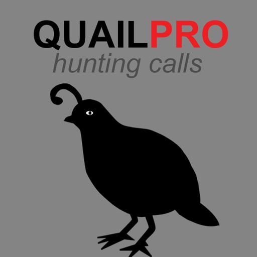 REAL Quail Sounds and Quail Hunting Calls