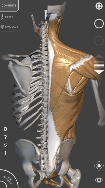 3D Anatomy for the Artist | v. 1.2 screenshot-4