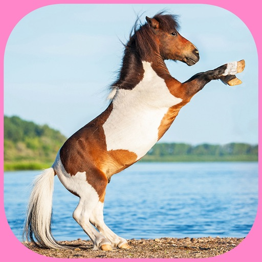 Find the Pair : Ponies : Free Matching Game