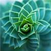 Suculentas Planta 101: guia crescente e Cuidados