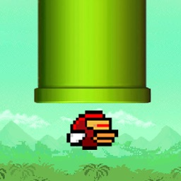 Forest Bird : Free Game For Boys' & Girls'