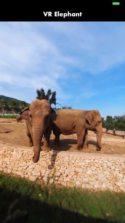 360 VR Elephant - Nature VR Apps for Kids screenshot-3