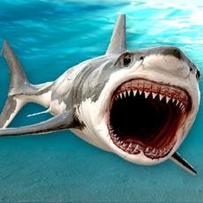 Activities of Killer Jaws Shark: Hungry Hunter HD