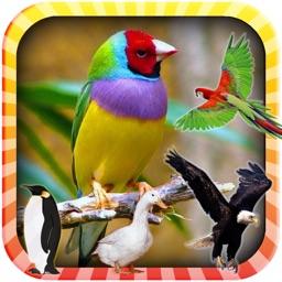 Learn the Birds