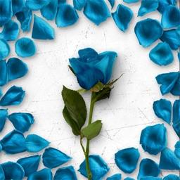 Flower Greetings Blue Roses