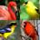 Oiseaux célèbres du monde - Quiz sur l'oiseau
