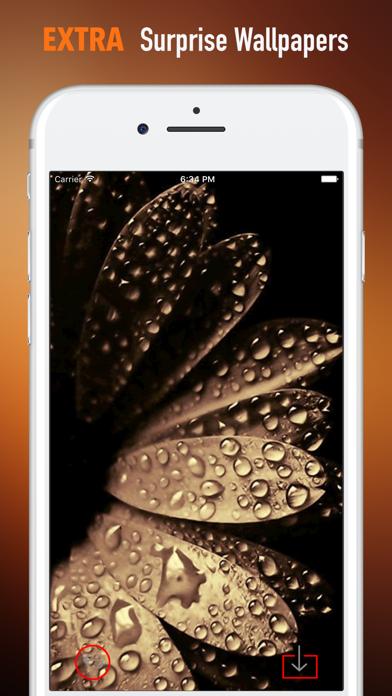 黒と金の壁紙HD-引用とアートのおすすめ画像3