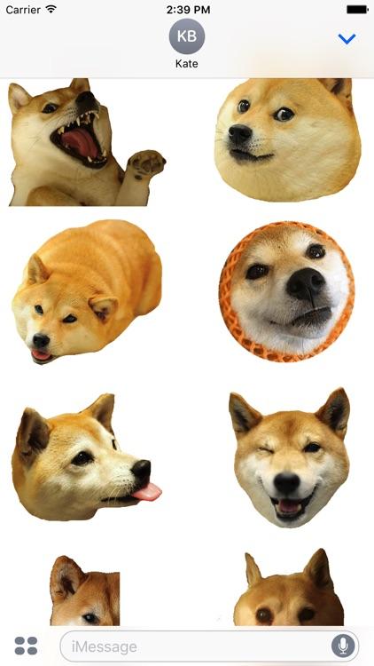 Shiba Dog's Head