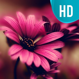 Awesome Natural Flower.s HD Wallpaper.s Gallery