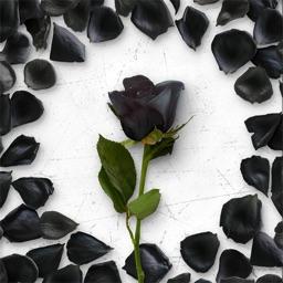 Flower Greetings Black Roses