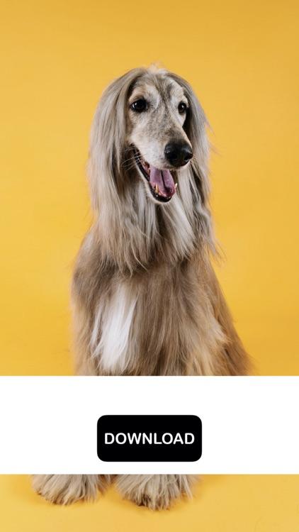 Dog & Puppy Wallpapers - woof! screenshot-4