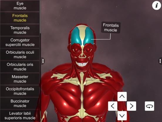 Learn Muscular System screenshot 10