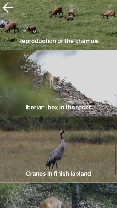 自然と野生生物紹介画像3