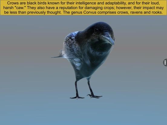 Diversity in Living: Aves screenshot 15