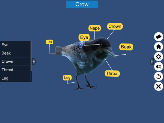 Diversity in Living: Aves screenshot 17
