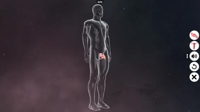 Human Reproductive System screenshot 2