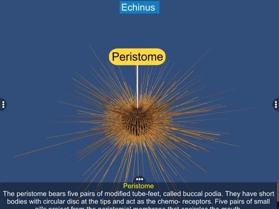 Echinodermata screenshot 20