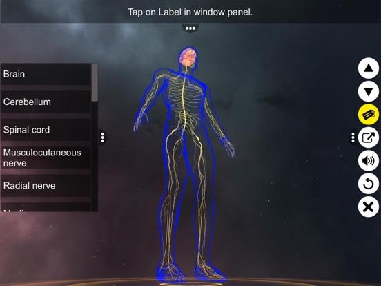 Human Nervous system screenshot 7