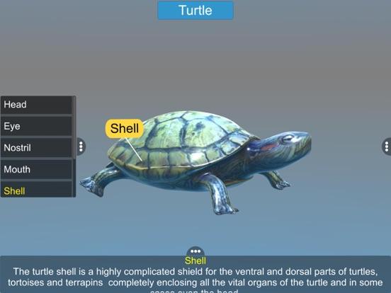 Diversity in Living: Reptilia screenshot 14