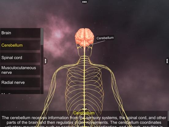 Human Nervous system screenshot 8