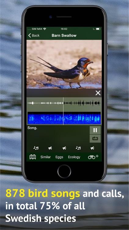 All Birds Sweden - Photo Guide screenshot-3