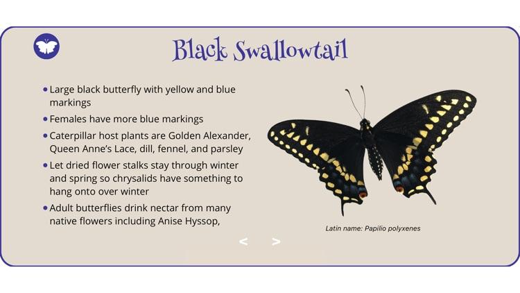 World of Butterflies screenshot-3