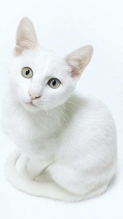 Cat & Kitten Wallpapers - meow screenshot-4