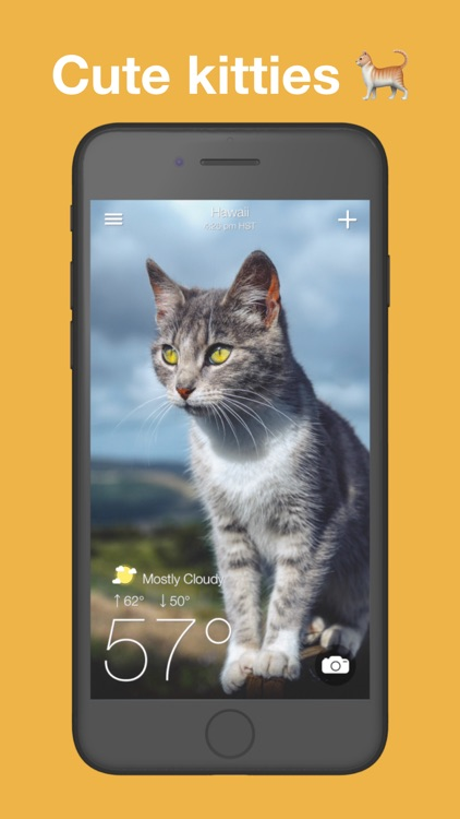 Kitten Weather: Forecast Radar