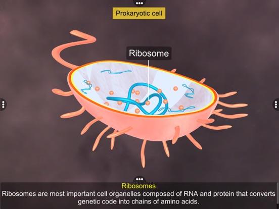Prokaryotic & Eukaryotic cell screenshot 12
