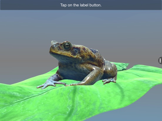 Diversity in Living: Amphibia screenshot 16