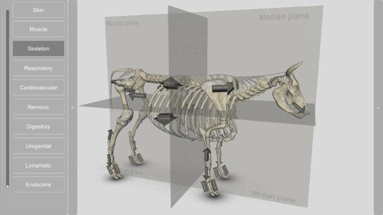 3D Bovine Anatomy screenshot-4