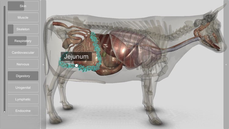 3D Bovine Anatomy screenshot-7