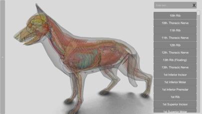 3D Canine Anatomyのおすすめ画像10
