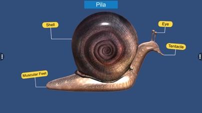 Diversity in Living: Mollusca screenshot 7