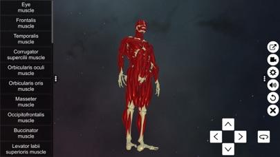 Learn Muscular System screenshot 2