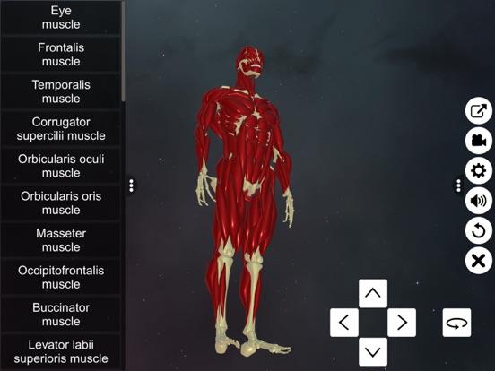 Learn Muscular System screenshot 9
