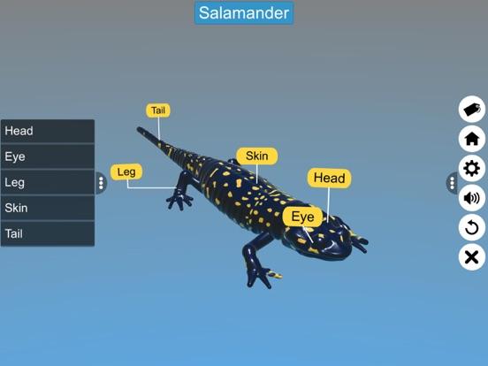 Diversity in Living: Amphibia screenshot 13
