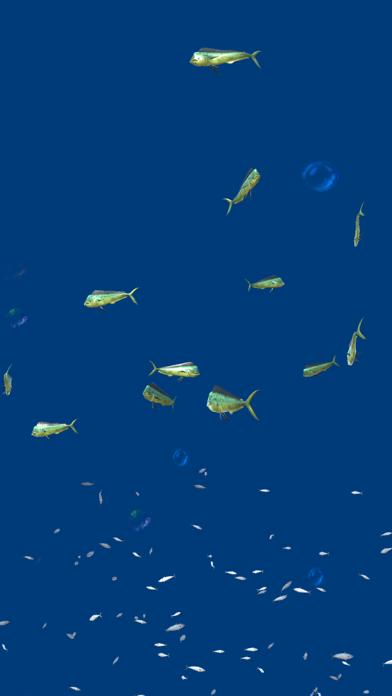 熱帯魚オアシス紹介画像3