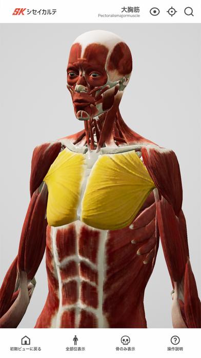 シンプル人体模型紹介画像1