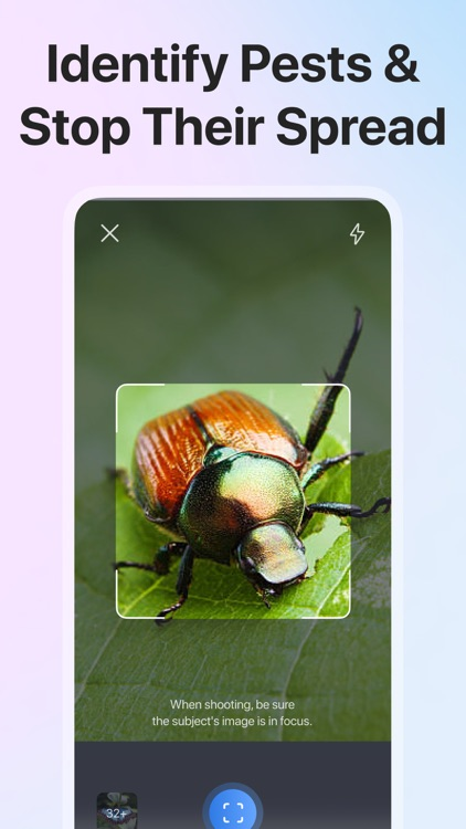 Picture Insect: Bug Identifier screenshot-3
